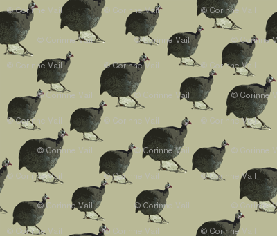 Beige Guinea Hen