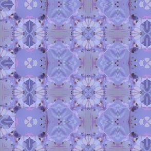 Chionodoxa carpet