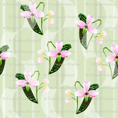 ©2011 orchids