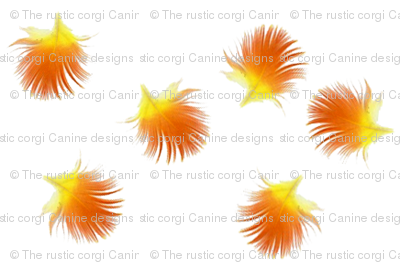Sunny Conure feather flowers