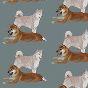 Rrrshiba_inu_four_shop_thumb