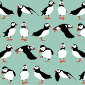 R_aqua_puffins_2015_st_sf_shop_thumb