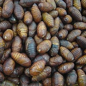 silk-worm cocoons