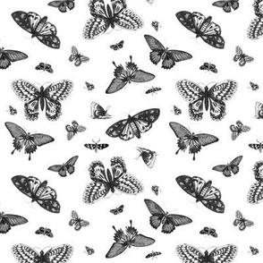 Vintage Butterflies - Black and White