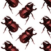 Rrrred_beetles_shop_thumb