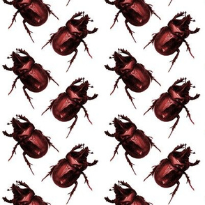 Red Beetles