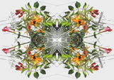 trumpet-vine fabric by wren_leyland on Spoonflower - custom fabric