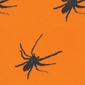 Halloween Spiders at University of Texas