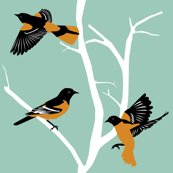 Rorioles_12in_shop_thumb