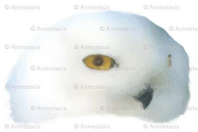 Snowy Owl, L