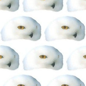 Snowy Owl, S