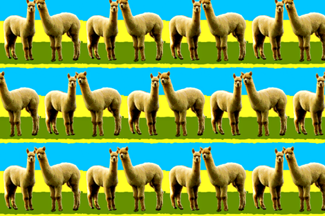 Llama Llove II fabric by robin_rice on Spoonflower - custom fabric