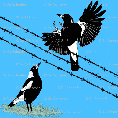 Magpies: learn to fly and food call by Su_G