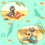 afghan hound pups in a  florida beach scene