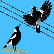Magpies: learn to fly 2 with gray