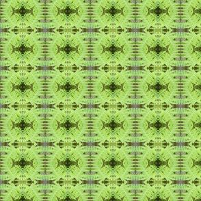 cropped_fern2