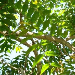 Idyllwild Canopy