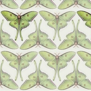 Vintage Luna Moths