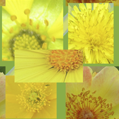 Flower Centers - photographic