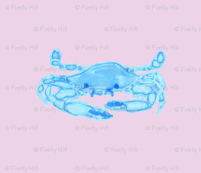 Blue Crab on pinkish lavender