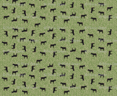 DonkeyWhirl