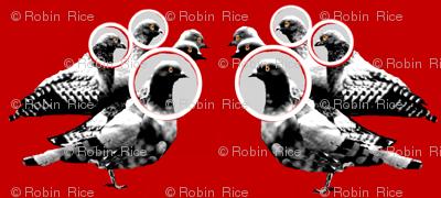 Pigeon Portraits II