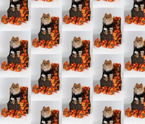 Pomeranian in Autumn fabric by thegiltreys on Spoonflower - custom fabric