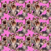 Rrrrpink_yorkies_shop_thumb