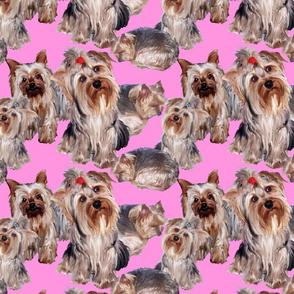 Yorkies on Pink Background