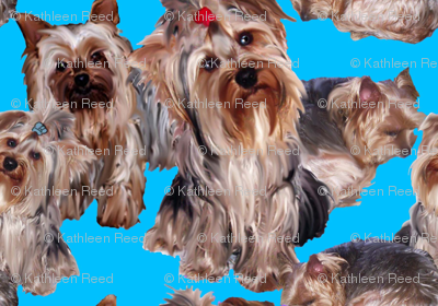 YORKIES ON TEAL BACKGROUND