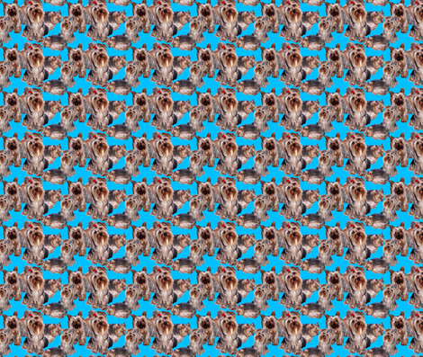 YORKIES ON TEAL BACKGROUND fabric by dogdaze_ on Spoonflower - custom fabric