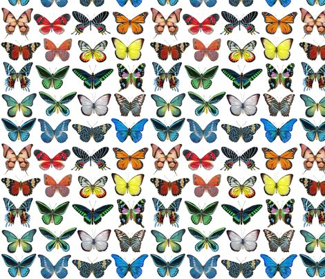 Rrrrrall_butterflies_lined_up_copy_shop_preview