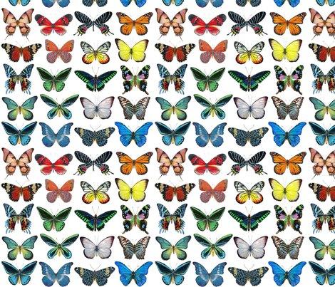 Rrrrrall_butterflies_lined_up_copy_shop_preview