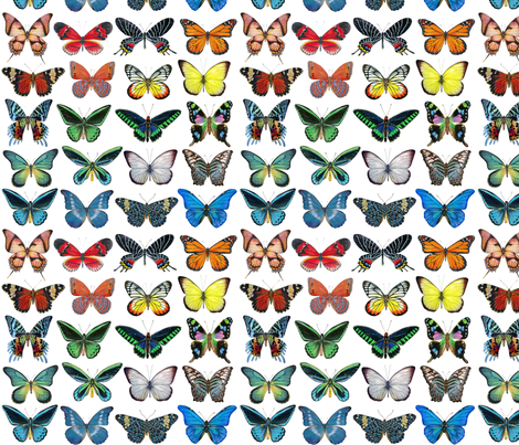 Colorful Butterflies fabric by angelaanderson on Spoonflower - custom fabric