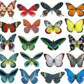 Rrrrrall_butterflies_lined_up_copy_shop_thumb