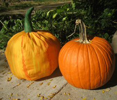 Decorate your pumpkin kit (darker)