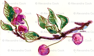 Cherries by Alexandra Cook
