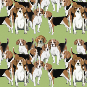 A pack of Beagles