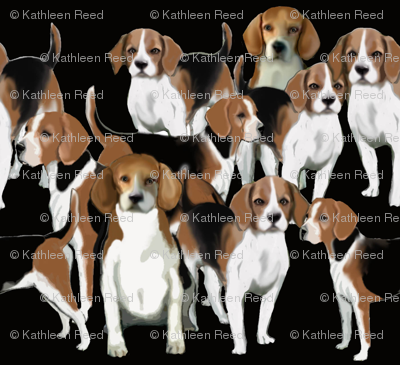 Black White and tan Beagles