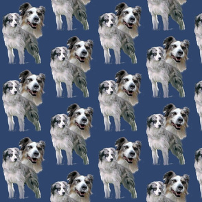Blue Merle Australian Shepherds  fabric