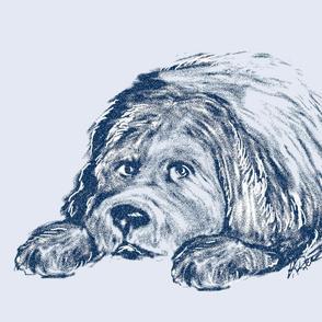Newfoundland puppy in Blue