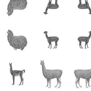 Greyscale Llamas