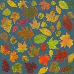 tiny leaves on slate