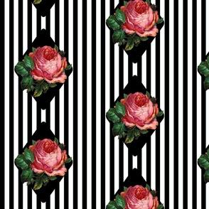 Black 'n' Rose