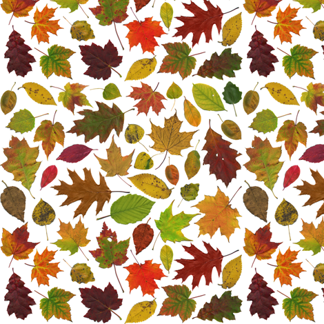 tiny leaves on white fabric by weavingmajor on Spoonflower - custom fabric
