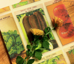 Rrrfrench_seed_packets_color_adjusted_copy_comment_111898_preview