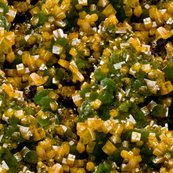 Rrwulfenite_and_mimetite_shop_thumb