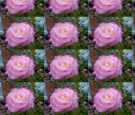 Pink Rose fabric by moonduster on Spoonflower - custom fabric