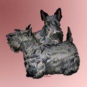 Rrscotch_terrier__shop_thumb