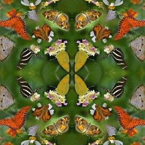 Butterfly Convention